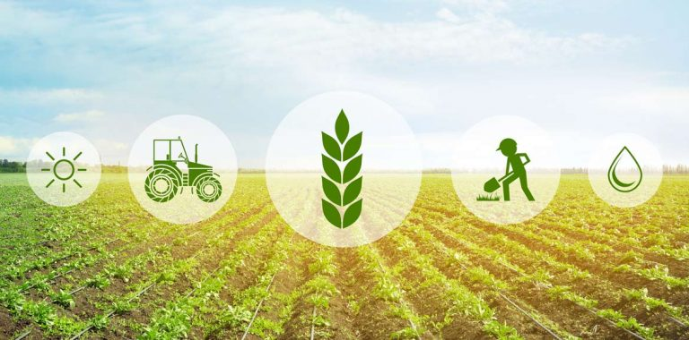Agrifood sostenibile