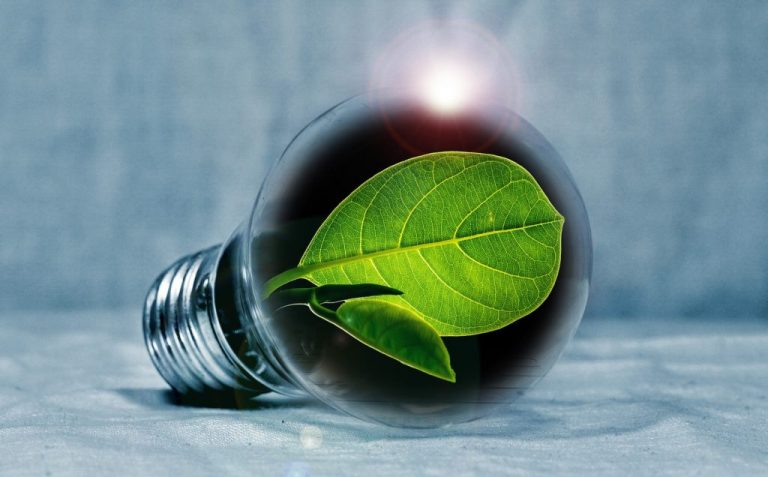 Digitalizzazione e sostenibilità