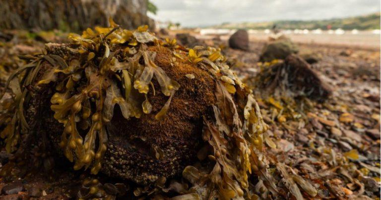 Imballaggi alghe marine